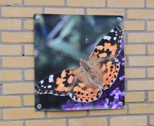 canvasdoek vlinder
