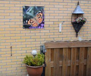 canvasdoek met vlinder tuinfotografie