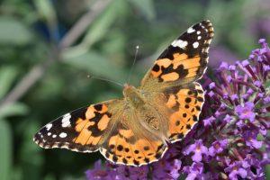 vlinder fotografie tuinfotografie