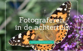 tuinfotografie fotograferen in de achtertuin