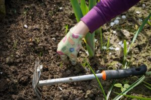 biologisch eten uit eigen tuin